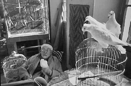 Matisse & his doves